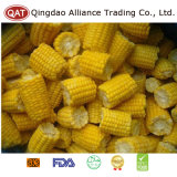 Épis congelés par IQF de maïs pour l'exportation