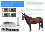 Testimonial de la terapia de la onda de choque para lesiones suspensorias próximas del ligamento del caballo