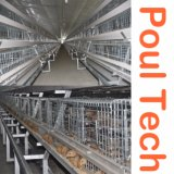 Автоматическая Pullet аккумулятор цыпленок отсек для день старого цыпленок/Детский цыплят Jaula де Польо