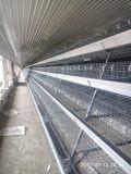 Стальные конструкции и Сэндвич панели низкая стоимость птицы фермерский дом дизайн с оборудованием