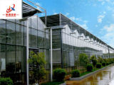 Venlo Glass Greenhouse for Flowers and Vegetable Growing