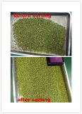 각종 콩을%s 색깔 분류하는 사람, 녹두, 콩, 신장, 중앙 동쪽 지역에 있는 해바라기 씨