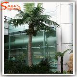 Palmier artificiel de noix de coco pour la décoration de stationnement ou d'hôtel