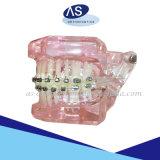 Hot Hot de nouveaux supports auto orthodontique ligaturant avec tous les crochets Ce ISO de la FDA