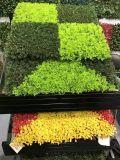Piante di alta qualità e fiori artificiali della parete verde Gu-Wal008976600823