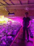 El espectro completo LED de la FCC RoHS del Ce crece la lámpara profesional ligera de la planta de la cultivación