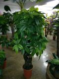 Piante e fiori artificiali di Schefflerra Gu-Bj-765-900-1