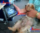 Pratique ultrasons à usage vétérinaire pour la reproduction exacte de la numérisation