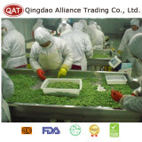 Haricots verts congelés de bonne qualité de coupure