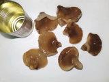 Les conserves de champignons d'ormeaux en 425g