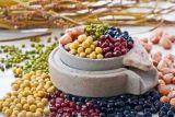 중국에서 고품질 마른 콩