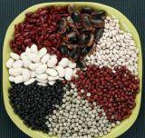 中国からの高品質の乾燥豆