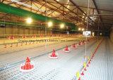 Línea de alimentación de pollos de engorde con equipo de granja automático en casa de estructura de acero Prefab