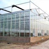 La serra di vetro di Multispan di alta qualità da vendere