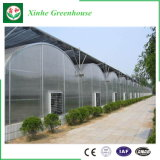 Fácil ensamblaje hojas pequeñas de vidrio solar en invierno el bastidor de efecto invernadero agrícola