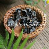 Preiswertestes grünes organisches gesundes Nahrungsmittelschwarz-Pilz-Gemüse