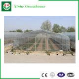 緑の成長のためのポリカーボネートシートの温室
