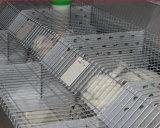 Equipo automatizado de la jaula del conejo