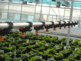 Película tipo arco de la multifunción de gases de efecto para la siembra y aves de corral