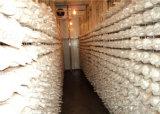 きのこの成長する低温貯蔵のスリラー/Storagre冷たい部屋