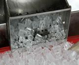 Máquina de gelo de cristal do competidor da câmara de ar 10t/24hrs de Icesta