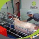 돼지 현대 돼지 농장을%s 새끼를 낳는 크레이트 사용