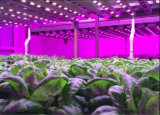 PF mehr als O. 9 LED wachsen Licht