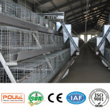 Jaula estable del pollo del pájaro de la parrilla de las aves de corral de la fábrica directa para las ventas al por mayor