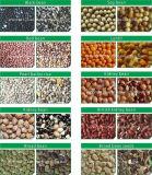 옥수수를 위한 트루 컬러 CCD 색깔 분류 기계