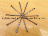 Hot Selling Polished / Galvanized Common Iron Nails From Factory