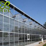 Sistema idroponico Vertica della serra di vetro crescente