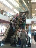 Подъем эскалатора Fujizy