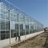Serra del film di materia plastica di alta qualità per la piantatura le verdure e delle frutta