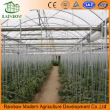PE de Serre van de Film voor Landbouw/Gardening