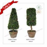Пальма Topiary реального чывства промотирования искусственная для украшения H30-H80cm рождества