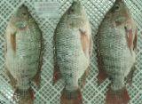 Замороженных морепродуктов разведения тилапии IQF рыба тилапия филе тилапия (oreochromis Niloticus)