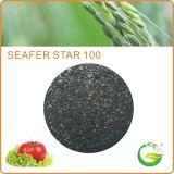Bio- fertilizzante organico dell'estratto dell'alga