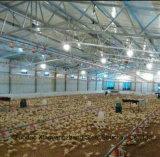 Estrutura de aço Modular luz House para o celeiro de frango