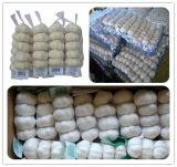 La nouvelle récolte petit sac de maille de l'emballage de l'ail blanc pur
