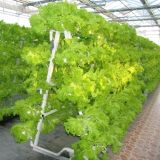 Sistema de irrigação gota hidroponia em óleos vegetais