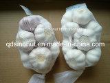 Aglio bianco normale fresco cinese
