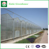 Invernadero de la hoja de la PC con el sistema hidropónico para Angriculture&Aquaponics&Cucumber