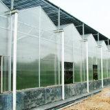 Venlo Feuille de polycarbonate pour effet de serre de légumes de serre