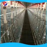 養豚場の家のための自動チェーンブタの挿入システム