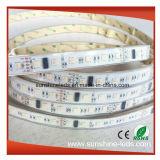 Striscia indirizzabile impermeabile di IP65 DMX512 Digitahi RGBW LED
