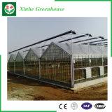 Venlo vidro para a agricultura com efeito de estufa