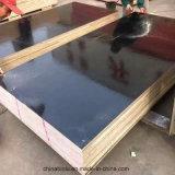 Finger Joint Película Negra enfrenta la madera contrachapada / Consejo para la construcción