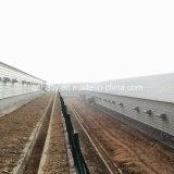 Конструкция дома птицефермы Qingdao Hapy полуфабрикат