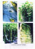 Bio- fertilizzante di Unigrow sulle verdure del melone