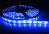 300LEDs/60LED/M IP66 impermeabilizzano l'indicatore luminoso di striscia flessibile di SMD5050 LED